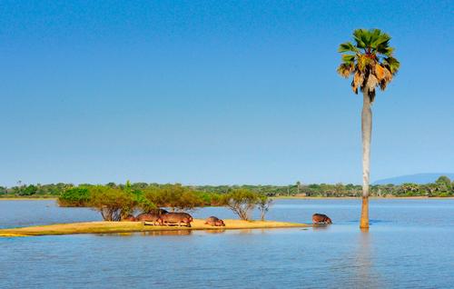 2016年6月 摄于坦桑尼亚塞卢斯-张立国.jpg